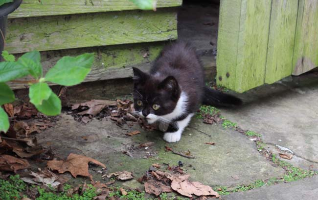 Arwen coming out of garden shed