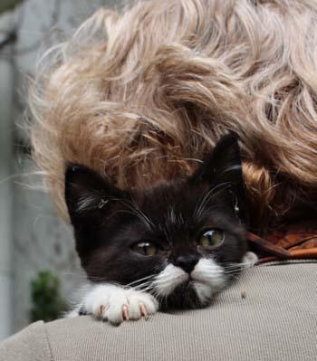 Arwen on M's shoulder