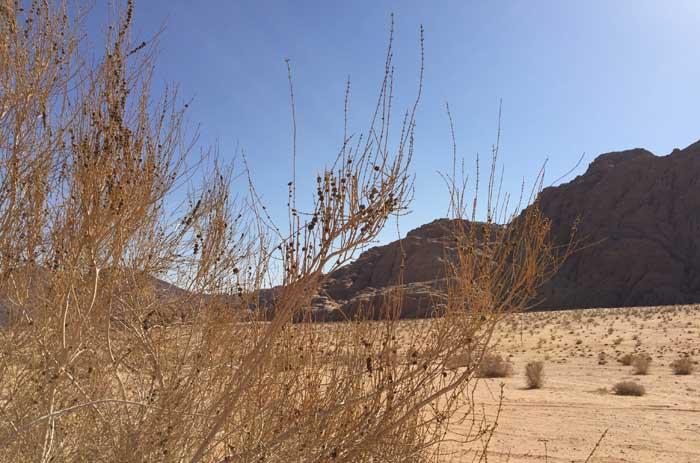 Bush and rocks desert