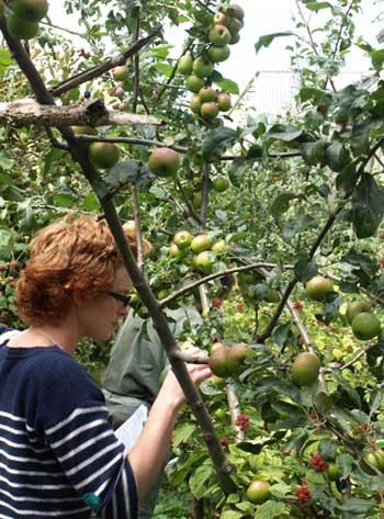 Cressida and apple trees