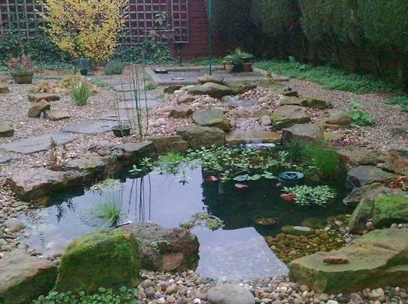 John's Frog Pond