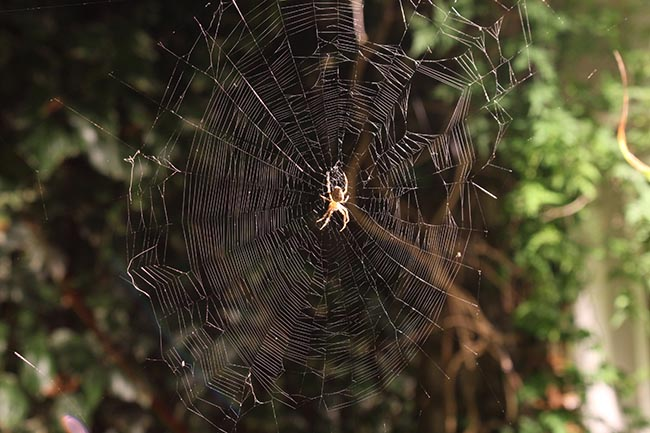Spider and web
