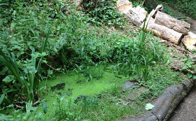 belsize wood pond