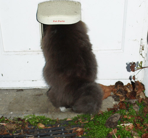 Frodo and the catflap