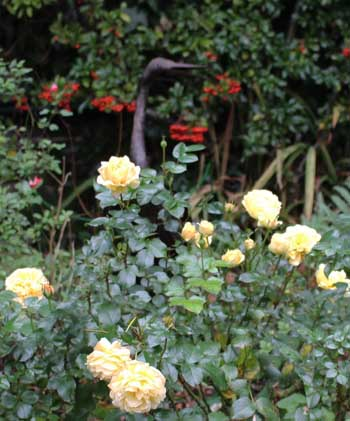 heron and roses