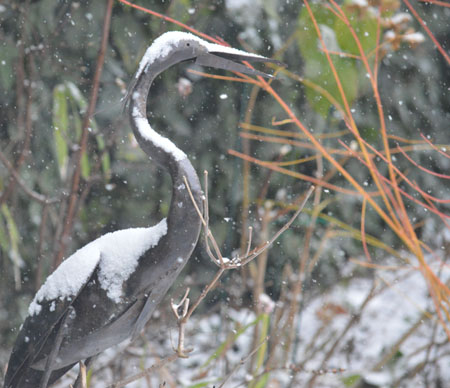 Heron in the snow